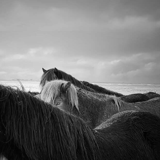 07-1st-ANIMALS-Xiaojun Zhang.