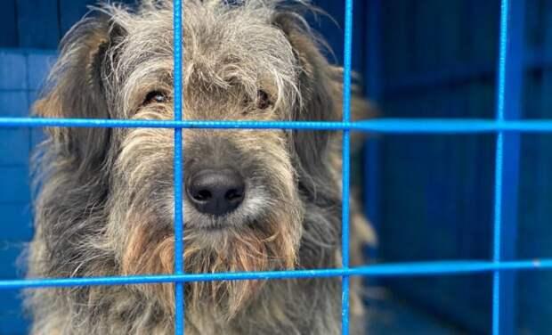 Крупную собаку отказывались брать из-за размеров, но нашлись те, кто его приютил