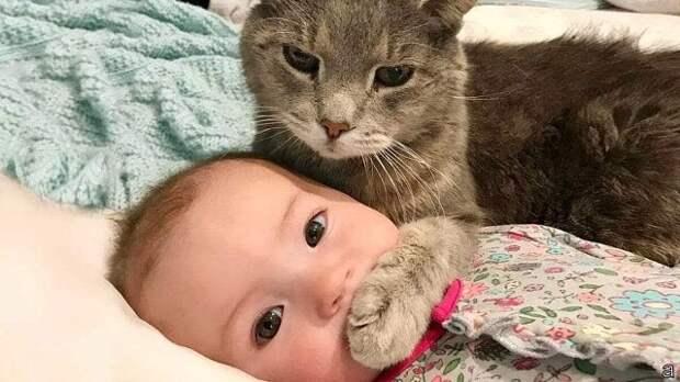 Кошка, меняющая судьбы