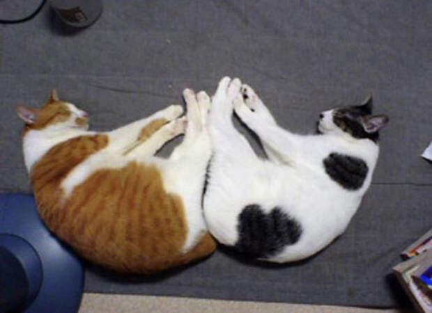 Котэ, которые спят в причудливых позах... Кот, Сон, Поза, Позитив, Всем удобно, Длиннопост