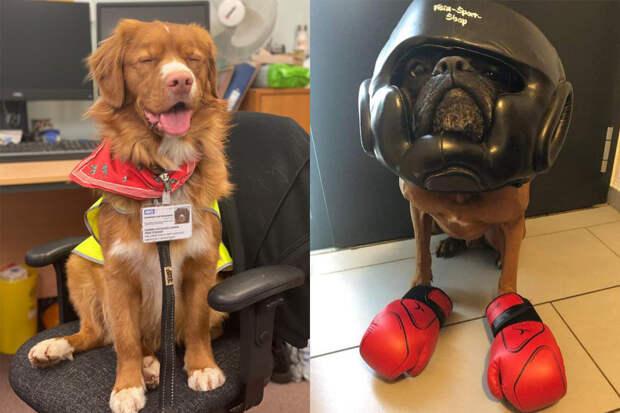 10+ ответственных собак, которые гордятся своей работой