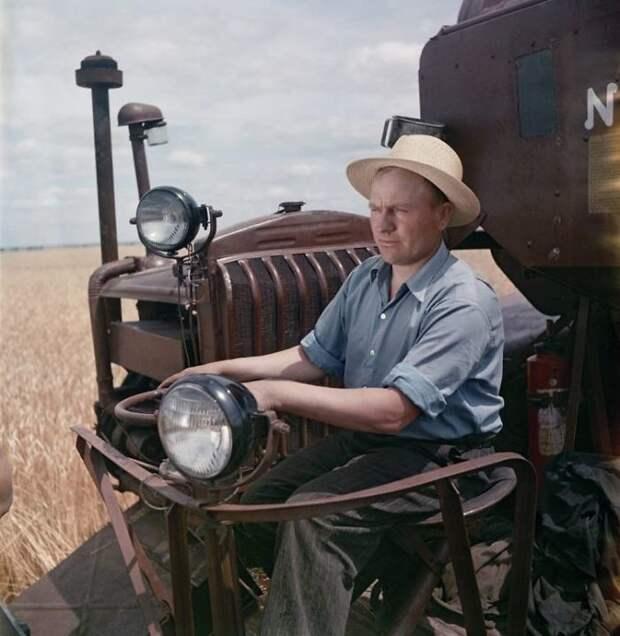 Сбор урожая пшеницы 50-е, СССР, история, моменты, повседневная жизнь, редкие фото, советский союз, фото