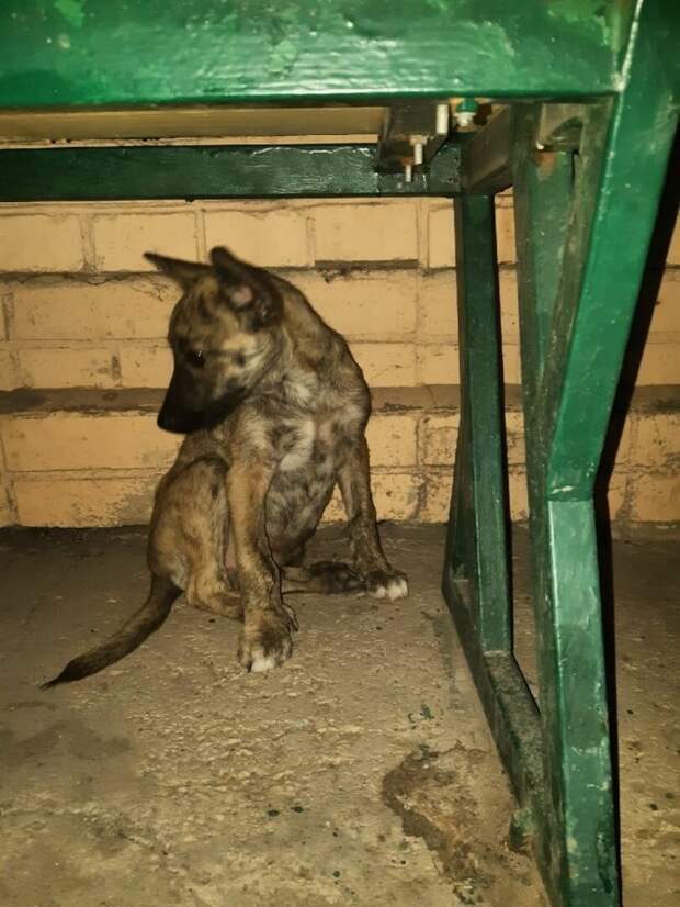 Брошенный щенок-«гиена» был выброшен на улицу детьми…