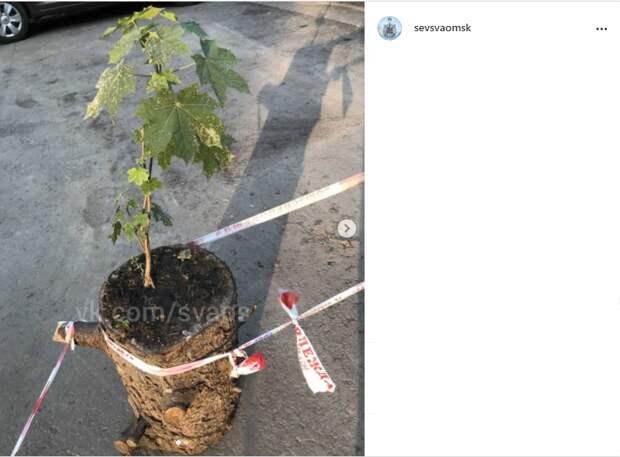 Фото дня: дерево из Северного цепляется за жизнь