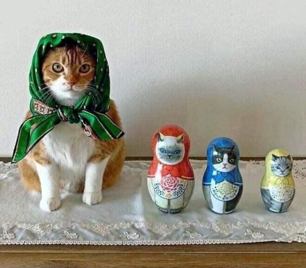 22 умильные кошки в платочках