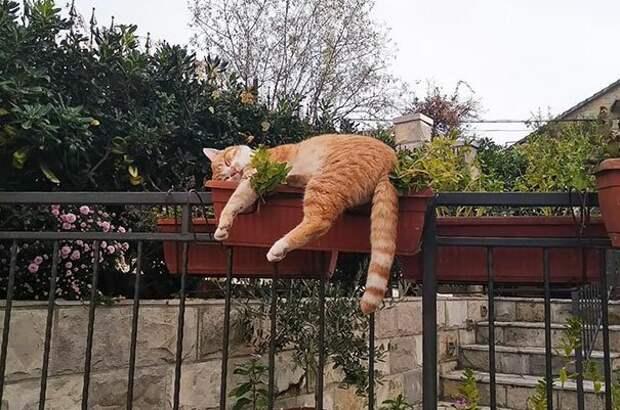 39. Так заснуть могли только коты животные, забавно, забавные животные, кот, коты, кошки, приколы с животными, смешно