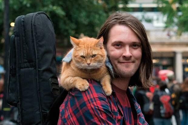 Настоящий Джэймс Боуэн и его кот. Картинка из интернета