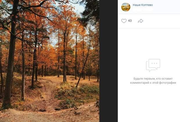 Фото дня: осенние краски в Тимирязевском лесопарке