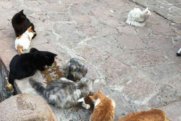 Потерявшийся кот вернулся в семью иракских беженцев, преодолев полмира (10 фото)