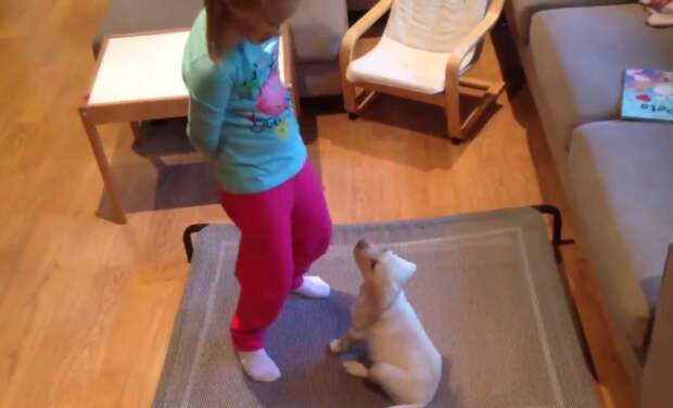 У четырехлетней девочки украли любимого щенка! Но спустя 3 дня воры передумали…
