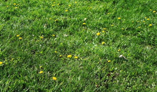 Нижегородцам запретили косить траву ниже 5 сантиметров