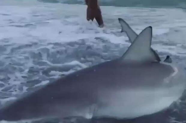Девушка пришла на помощь акуле, которую шторм выбросил на берег