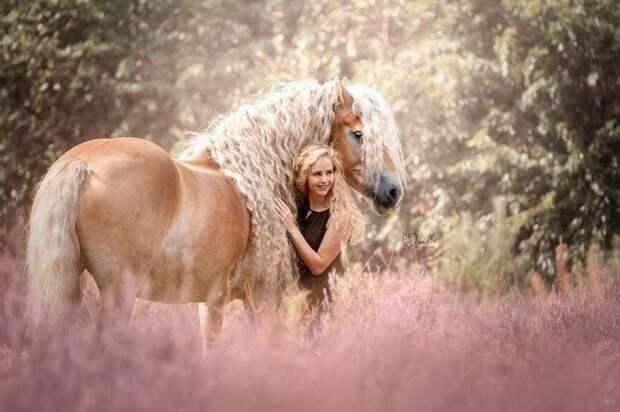 Эти красавицы уже стали героями всевозможных фотосессий голландия, девушка, животные, красота, лошадь, фото, шевелюра