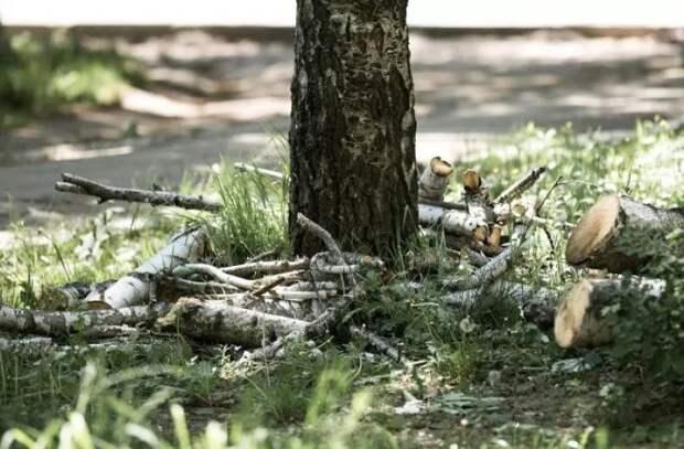 Когда и как решится проблема вырубки здоровых деревьев в Кишиневе