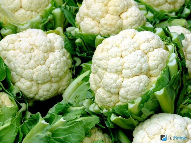 Какие овощи нельзя выращивать на одной грядке?