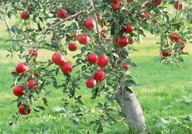 4 главные дачные приметы, в которые верит каждый садовод