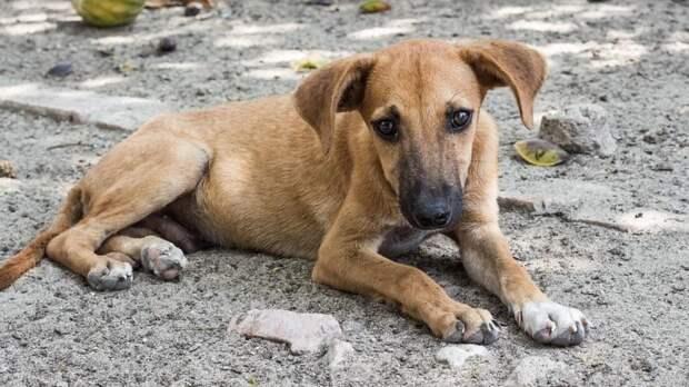 В Перми будут передавать бездомных собак на аутсорсинг частным приютам