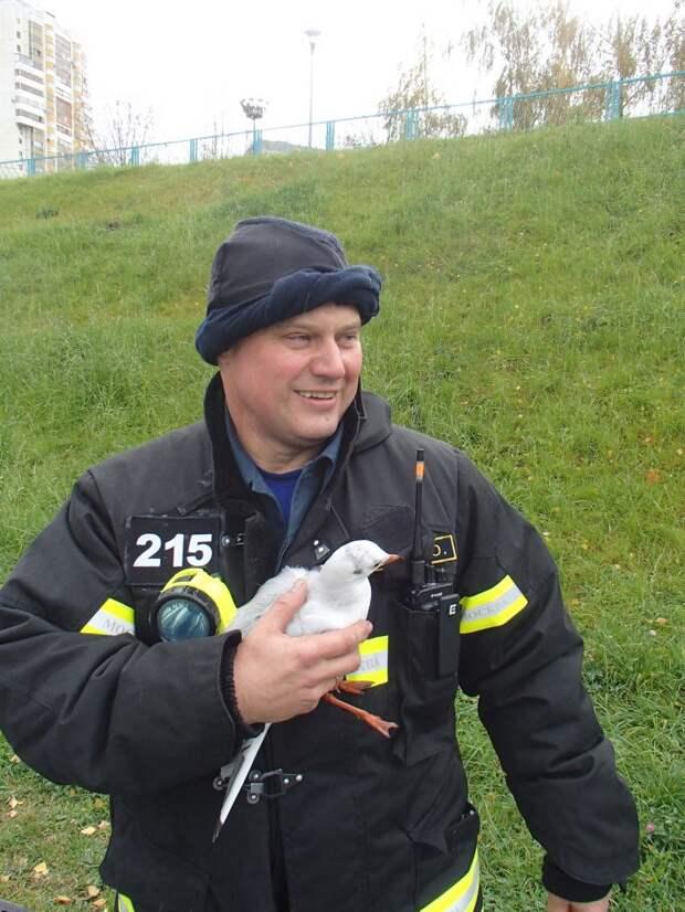 Спасенная чайка из Дюссельдорфского парка будет жить в Московском зоопарке