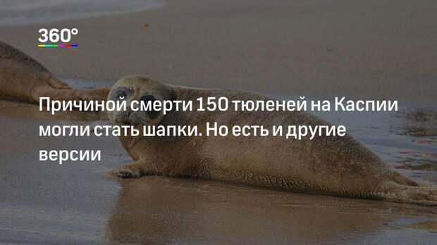 Причиной смерти 150 тюленей на Каспии могли стать шапки. Но есть и другие версии