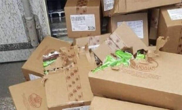 Одесская кошка пересекла два моря вконтейнере, питаясь конфетами
