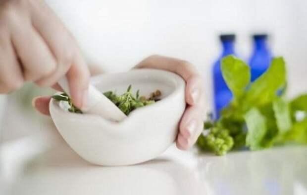 Каланхоэ: лечебное действие и рецепты