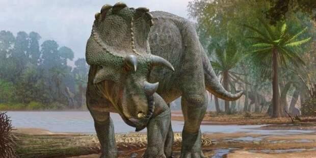 В США обнаружили останки рогатого динозавра возрастом 82 млн лет