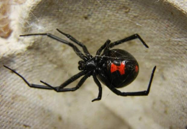 Как распознать ядовитых пауков и змей при помощи смартфона?