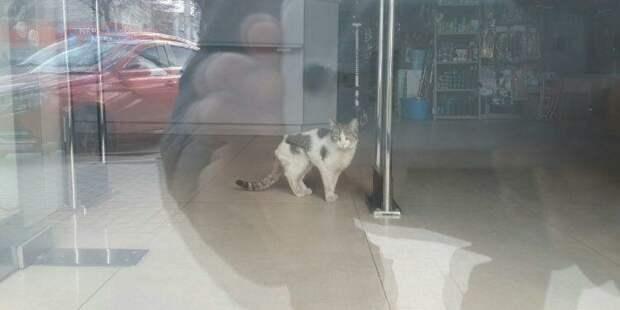 Рязанский кот самоизолировался в магазине: история спасения