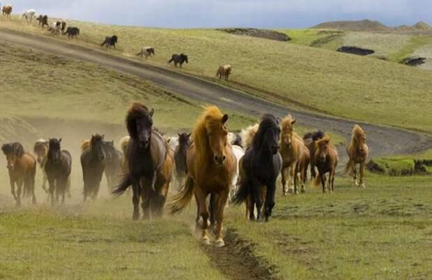 Красивая подборка фотографий животных и природы (67 фото)