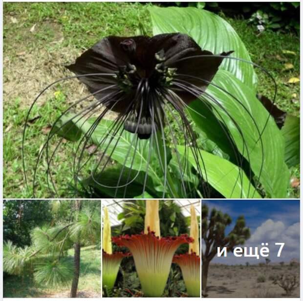 Самые необычные растения. Часть 1.