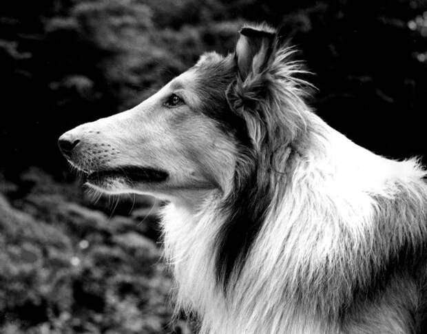 7 животных, которые достигли вжизни большего, чем вы