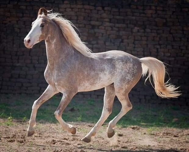 20 самых редких и красивых лошадей на Планете