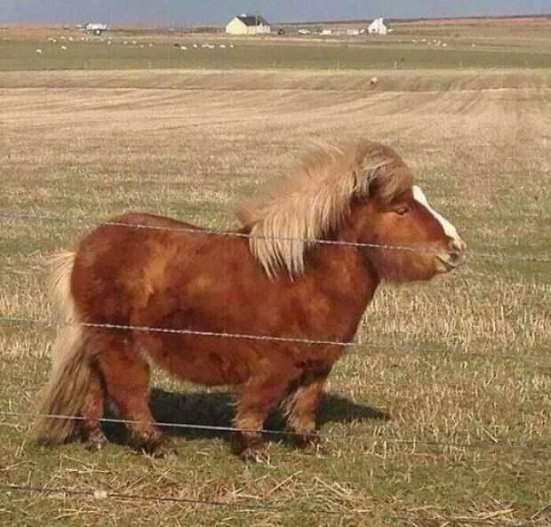 Могучий пони