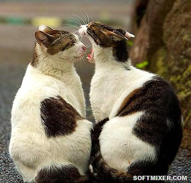 Кошки Токио в фотографиях Масаюки Оки