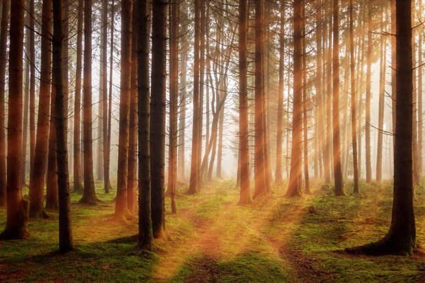 Проблема наложения земельных участков на земли лесного фонда. Лесная амнистия. Приоритет ЕГРН перед лесным реестром