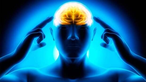 Сколько калорий сжигает мозг когда думает?