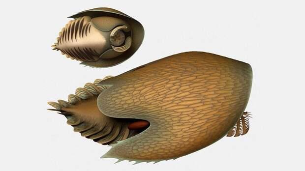 В Канаде нашли окаменелости древнего хищника
