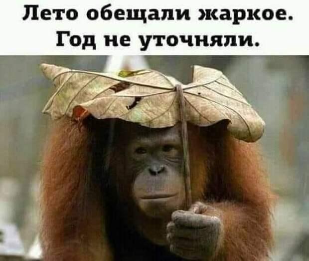 Возможно, это изображение (текст «лето обещали жаркое. год не уточняли.»)