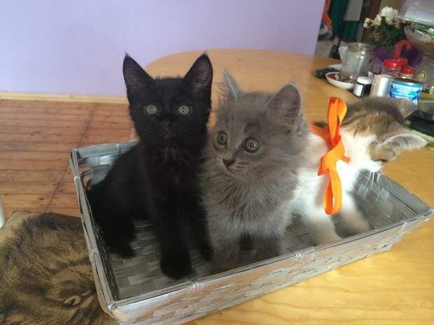 """В Оренбурге появился """"четвероголовый"""" кот."""