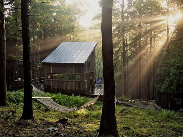 Дома в лесу