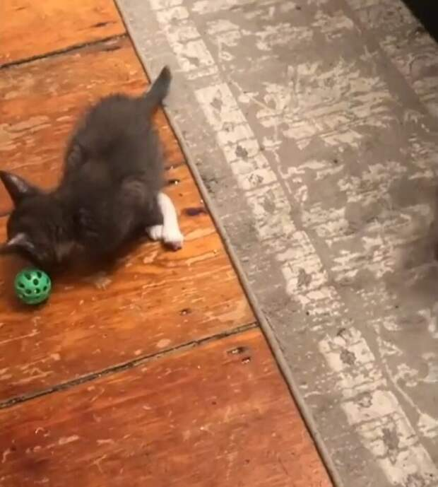 Котенок родился с длинной ножкой. Это ему не помешало жить счастливо