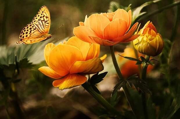 Цветы. Фото: открытый источник