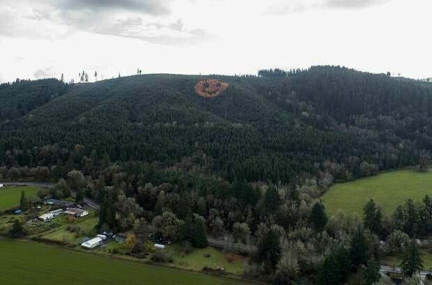 Где можно увидеть гигантский смайлик из деревьев