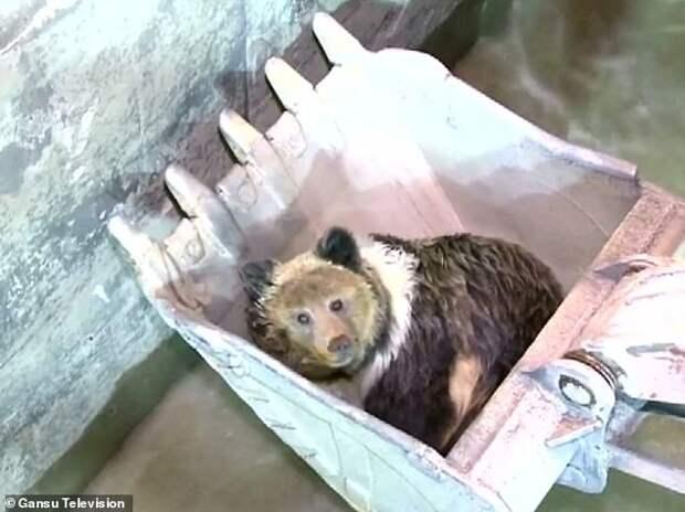 Застрявшего медведя пришлось спасать ковшом экскаватора