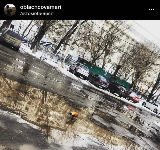 Фото дня: утка нашла мини-пруд у парка «Автомобилист»