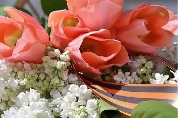 В Тамбове во дворах пройдут поздравления с Днем Победы