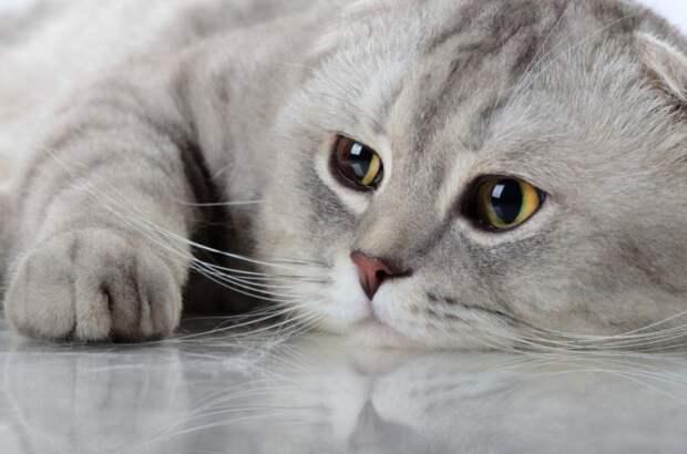 Через царапины кошек передаются бактерии, влияющие на мозг