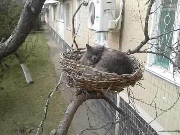 Милые весенние котики