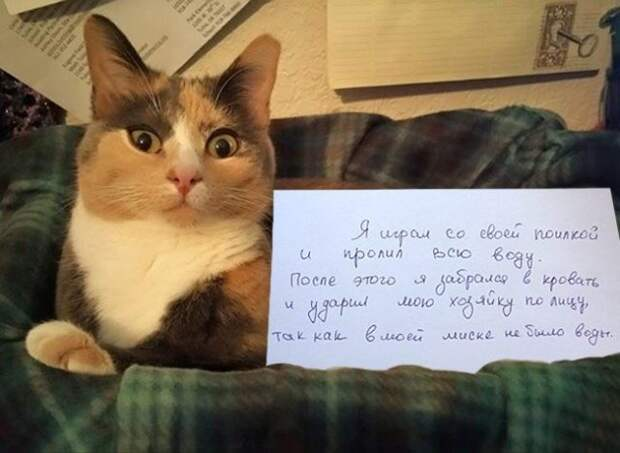 кошка с запиской