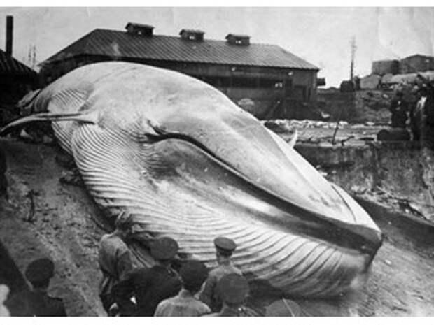 Конец Света на Курилах: самое страшное цунами в истории СССР